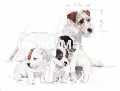 Relativ Babydog milk 2 kg Royal Canin. Leche para cachorros - Cachorros NC14